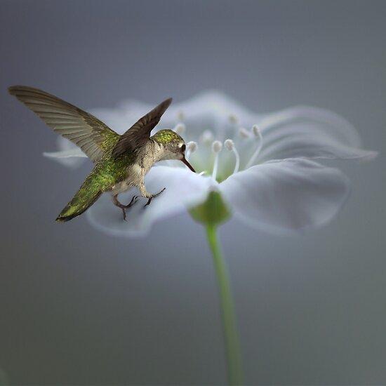 The sweat nectar by EbyArts