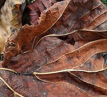 Fallen Leaf 1 by vigor