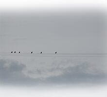 birds on the wire. by AnjiMarth