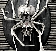 spider skeleton taxidermy mount. by AnjiMarth