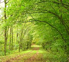 Woodland Archway by lorilee