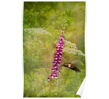 Foxglove Queen Ann's Lace and the Hummingbird Poster