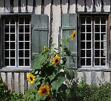 Green Windows Sunflowers by marybedy
