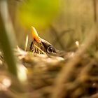 Nesting bird by Streak
