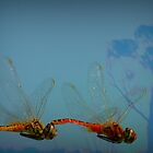 Dragonflies at Kakadu National Park by myraj