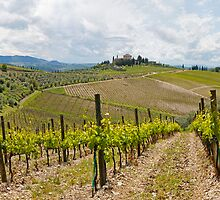The Vineyard Panorama by Adrian Alford Photography