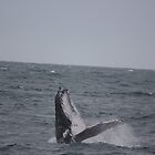 Humpback Whale Breaching by Kymbo