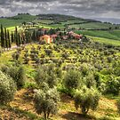Tuscany, Itlay by Robyn Carter