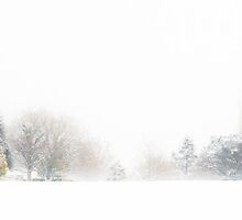 A Line of Tree's in the Snow by Heidi Stewart