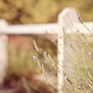 Lavender fence ♥ by Gisele  Morgan