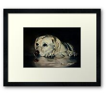 Yellow Labrador Framed Print