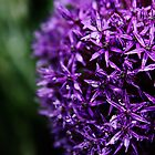 Purple Star Cluster by Michael Taggart