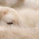 A Sheep All Nice and Warm by Heidi Stewart