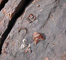 Rugosa fossils by zumi