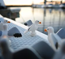 Seagulls by bricksailboat