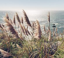 Reed, Wind & Ocean by visualspectrum
