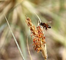 Busy Bee  by Trish Threlfall