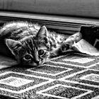 Kitty Mat by craziwolf