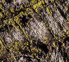 Bark & lichen by Celeste Mookherjee