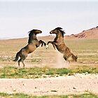 Showdown in the Desert by Kelly Jay