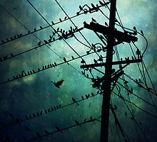 Bird City by Trish Mistric