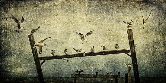 Natural Order by Andrew Paranavitana