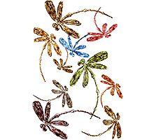 Dragonfly Frenzy Rainbow Photographic Print