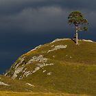 The Aigas Tree by David Barnes