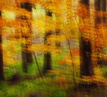 Artscape 5 by Imi Koetz