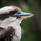 Australian Kookaburra by Chris Wheat