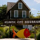 Atlantic City Aquarium by ctheworld