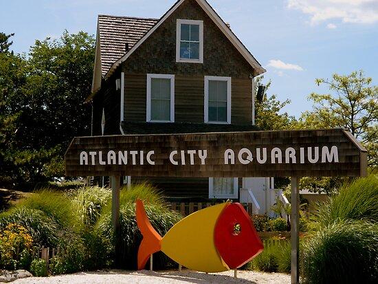 Atlantic City Aquarium By Ctheworld Redbubble