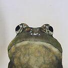 hey frog by diane nicholson