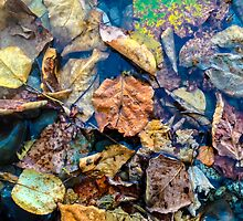 Autumn Leaves by Jim Stiles