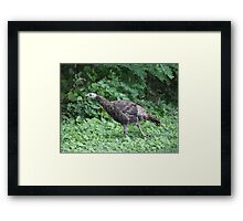 Milwaukee Wild Turkey Framed Print