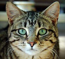 Little Kitty by MargaretMyers
