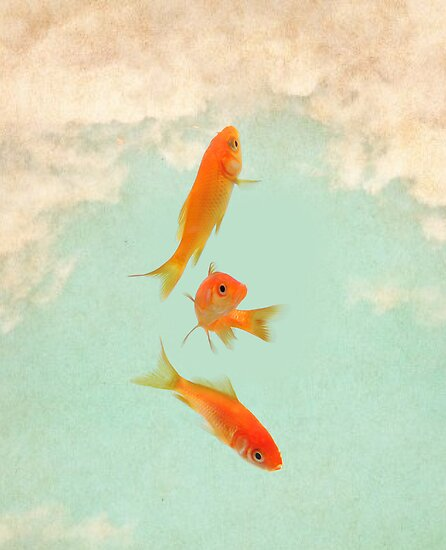 Goldfish in the sky by vinpez