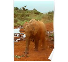 Baby Elephant Kicking Up Dust Poster