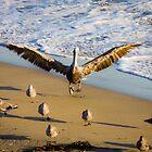 Pelican Landing by Philip Kearney