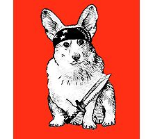 BAD dog – corgi carrying a knife Photographic Print