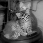 Oscar, Simon & LuLu by Grinch/R. Pross