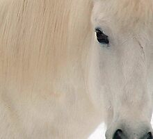 The White Pony's Profile by Wayne King