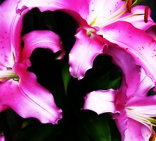Pink Lillies by jemvistaprint