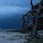 Driftwood Beach, Jekyll Island Georgia  by loriwellsphoto