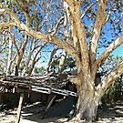 The Shack at Elim Beach by dozzam