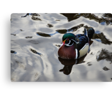 Wood Duck on Silver Canvas Print