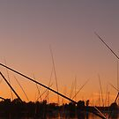 Lake Champlain - reeds II - 9.17.2013 by Nadia Korths