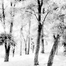 White Leaves by David Schroeder