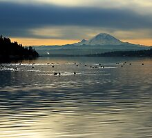 Mount Rainier on a Seattle Morning, 01/12/2012 by VimanaVisual