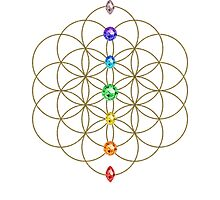 Flower of life - Chakras, healing & energizing by nitty-gritty